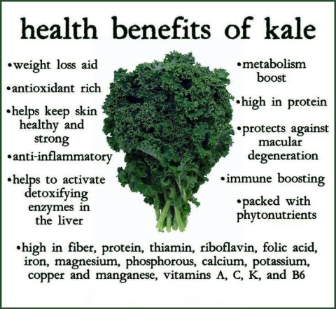 Happy National Kale Day!! – Living Everyday Wonderful