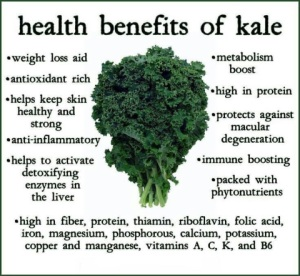 benefits-of-kale